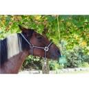 Liz pro koně Delizia,  náplň